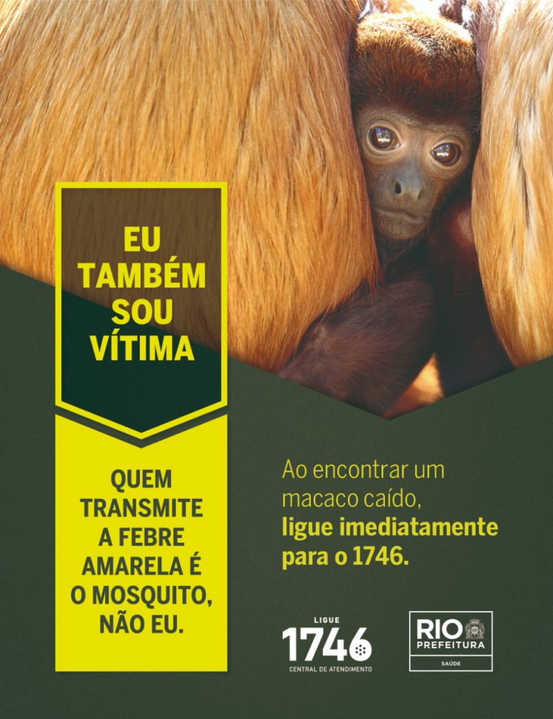 campanha macaco febre amarela